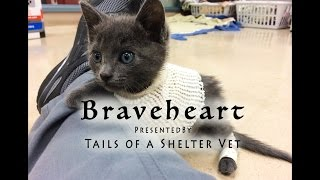 Braveheart – Tiny Kitten with Near-Fatal Injuries Saved by Shelter Vets