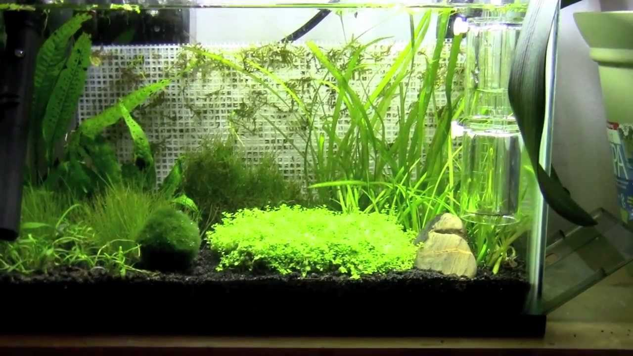 5 gallon betta tank new plants and lighting youtube for Well water for fish tank
