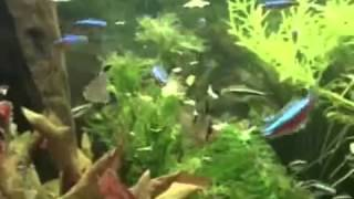 TetraMin основной корм для аквариумных рыб(, 2014-02-20T13:54:21.000Z)
