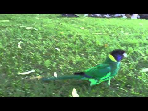 Twenty eight parrot