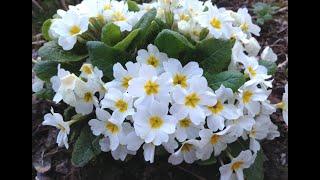 Что цветет в саду в апреле