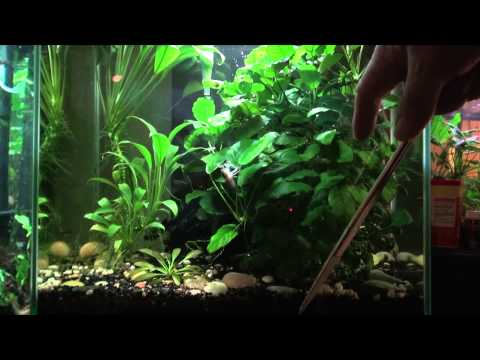 Aquarium Plants for Beginners
