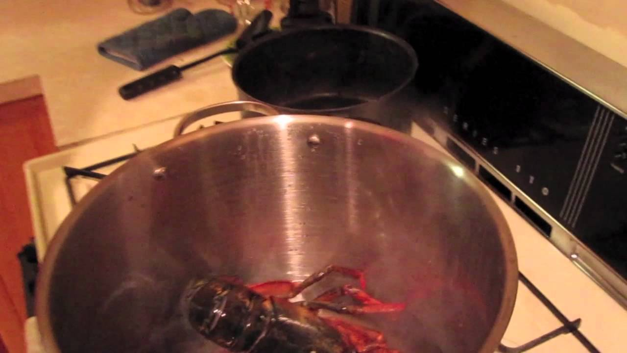 How To Steam Lobster Youtube