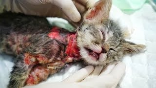 ABUSED KITTY BOILED ALIVE. HELP US SAVE CHICO!!