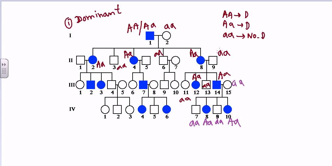 Pedigree analysis sex linked dominant pedigree YouTube – Autosomal Pedigree Worksheet