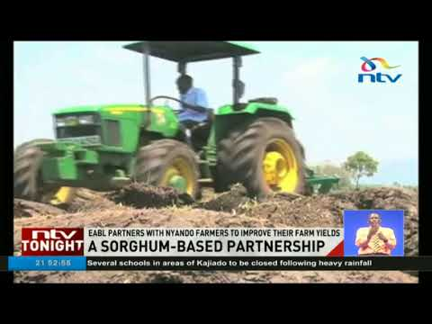 EABL to help Nyando farmers till 3,500 acres of sorghum