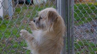 Bucknell University: Training Dogs Using Psychology
