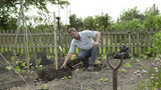 Planting Your Fruit Tree - How to Plant your Bare Root Fruit Tree.