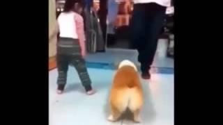 Тверк собаки