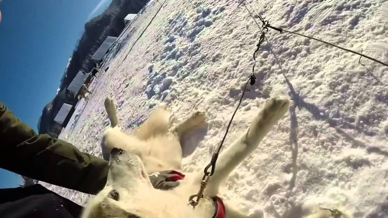 Fundog- Husky sledding in Zakopane, Poland
