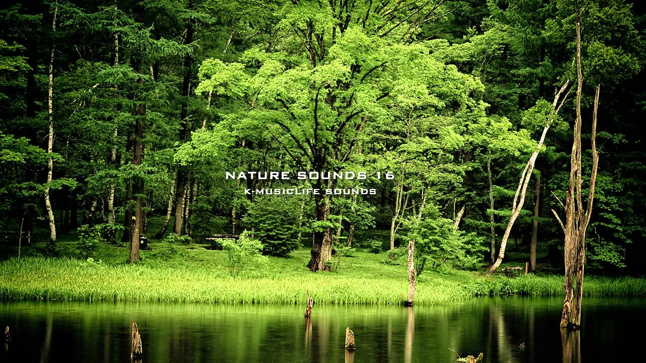 nature relaxing sound most sounds music relax relaxation forest effect doğa tip hour