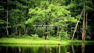 Nature Sound 16 - THE MOST RELAXING SOUNDS - thumbnail