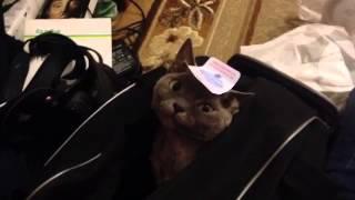 Кошка и наклейка :)