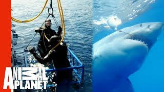 Great White Snaps Cage in Half | World