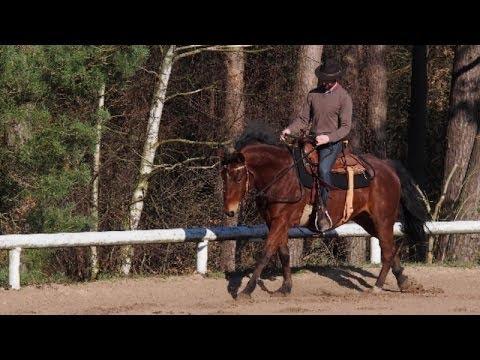 Équitation éthologique en Europe: En Selle - Pas, Trot & Galop