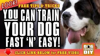 Dog Training San Jose | Free Dog Training Tips | Dog Obedience Training San Jose, Ca