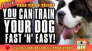 Dog Training San Jose | Free Dog Training Tips | Dog Obedience Training San Jose, Ca