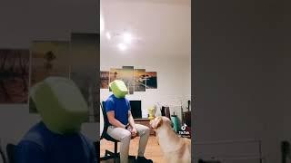 Топ Видео ТикТок Приколы про собак Короткие видео с животными