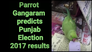 parrot predicts punjab election results