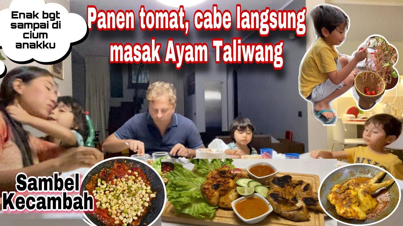 Download KEENAKAN SAMPAI DICIUMIN ANAKKU - PANEN CABE TOMAT LANGSUNG MASAK AYAM BAKAR TALIWANG