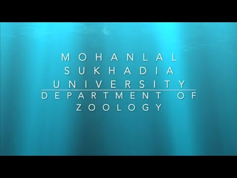 Department of Zoology, Mohanlal Sukhadia University