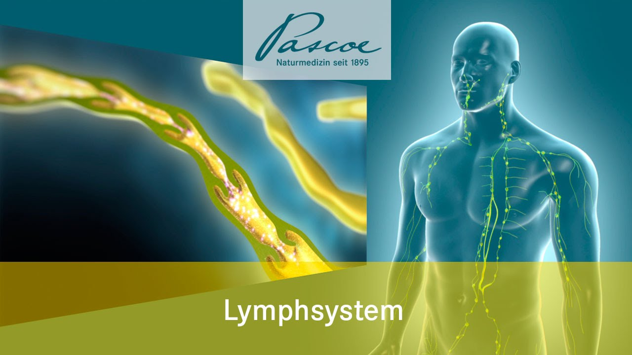 Pascoe Naturmedizin: Die Lymphe - Das Allerfeinste im Körper - YouTube