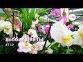150#110 / Хобби-Цветы / 08.02.2019 - OBI (ХИМКИ). ОБЗОР