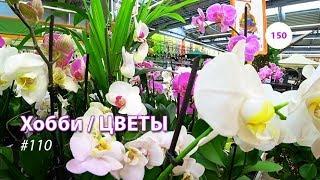 видео: 150#110 / Хобби-Цветы / 08.02.2019 - OBI (ХИМКИ). ОБЗОР