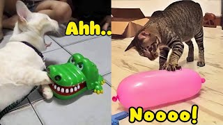 Funniest Dogs and Cats   Don't try to hold back Laughter   Funny Dogs and Cats moments