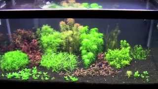 betta tank update august 2014 plant trimming