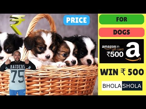 Pet Care - Price For Dog - Bhola Shola