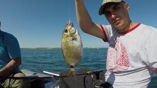 РАЗНООБРАЗИЕ ПОЙМАННОЙ РЫБЫ ЗАШКАЛИВАЕТ THE VARIETY OF FISH CAUGHT IS OFF THE SCALE