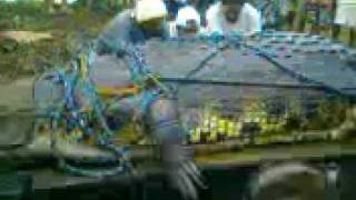 Giant Crocodile Captured Alive in Philippines 21ft long WWW.GOODNEWS.WS