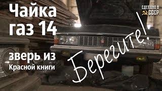 Чайка ГАЗ 14 - ЗВЕРЬ из КРАСНОЙ книги!