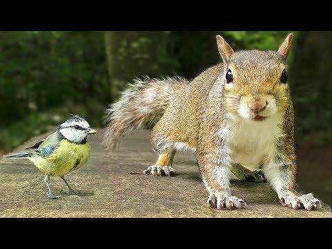 Videos Para Gatos – Pequeños Pájaros y Ardillas