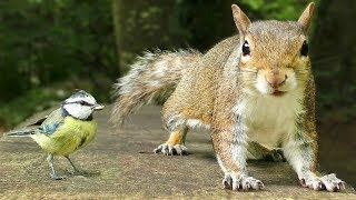 Entertainment for Cats - Tiny Birds and Squirrel Fun YouTube Videos