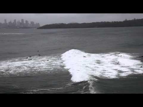 Sydney Harbour Surfing