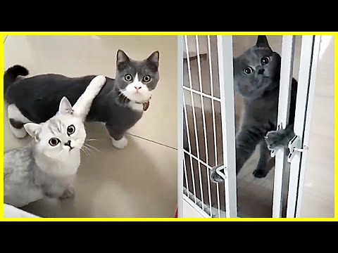 New Funny Cat Videos 2020 - CatOscar & Friends