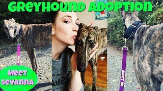 ADOPT A GREYHOUND! | Meet Sevana