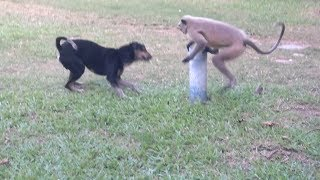 Dog vs Monkey LIVE Animal Instincts