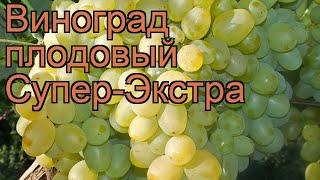 Виноград плодовый Супер-Экстра (vitis) ???? обзор: как сажать, рассада винограда Супер-Экстра