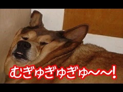 【吹いたら負け】癒されて笑えるwww可愛い動物画像集③ 笑えるペットの画像に癒されること間違いない!!!【わんこ編】