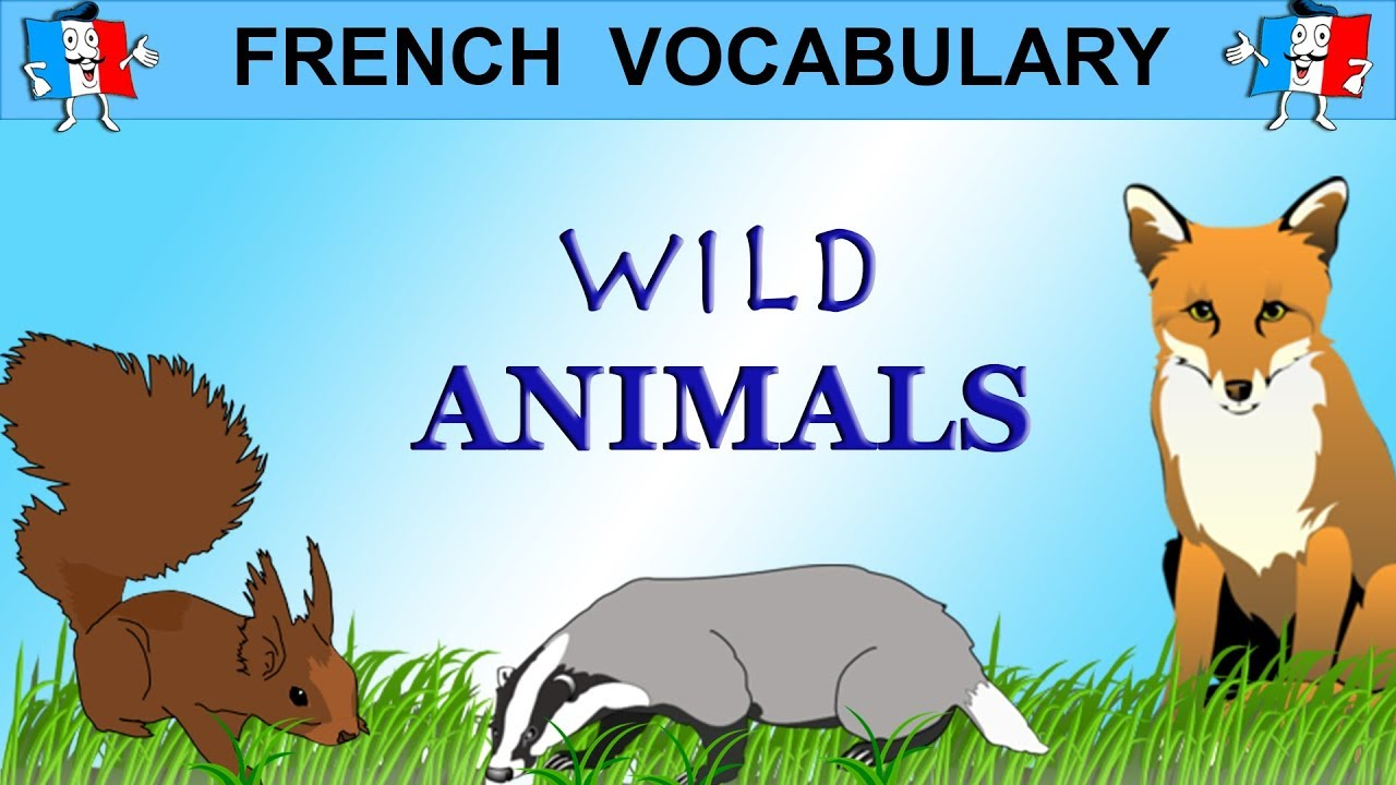 French Vocabulary - WILD ANIMALS