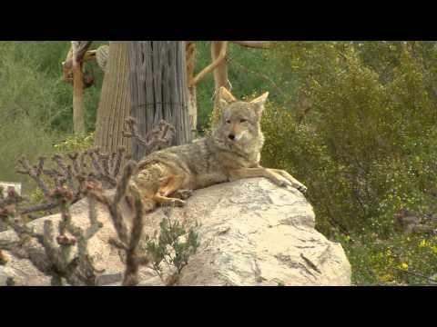 2013/2014 Arizona Wildlife Views - Show 7