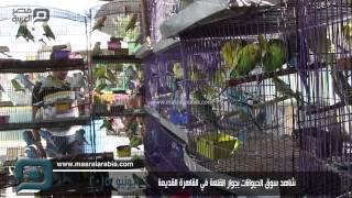 مصر العربية |  شاهد سوق الحيوانات بجوار القلعة في القاهرة القديمة