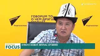 Kyrgyz Dobot: Revival of breed
