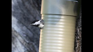Easy DIY Pipe Birdhouse That Really Works!