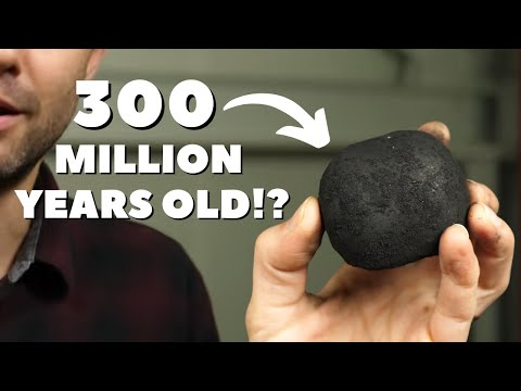 Why almost all coal was made at the same time