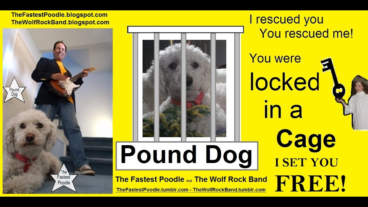 Pound Dog Rescue Dog Song – The Fastest Poodle And The Wolf Rock