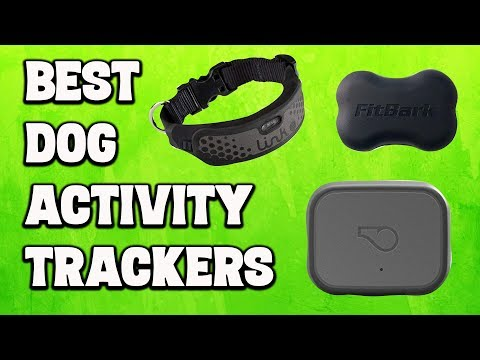 Best Dog Activity Trackers 2020